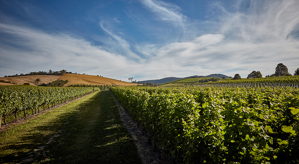 Summer in the Yarra Valley