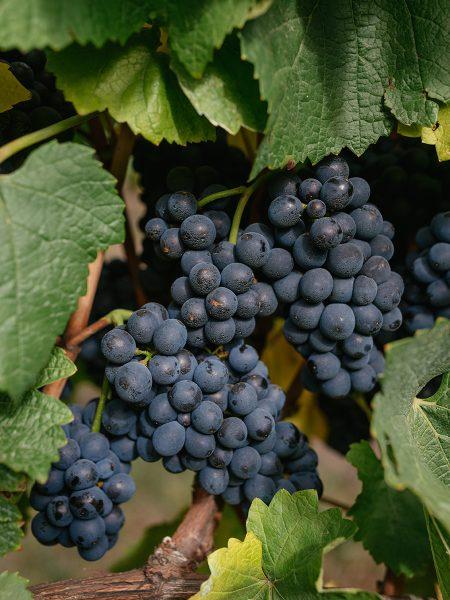 $250 Voucher, MV6 Pinot Noir